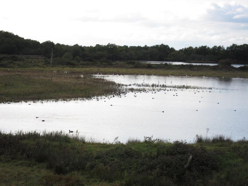Oiseaux hivernants de la Réserve Naturelle Régionale Terres et étangs de Brenne Massé-Foucault